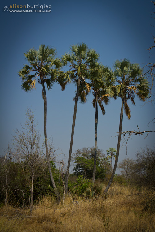 Lufupa, Kafue National Park