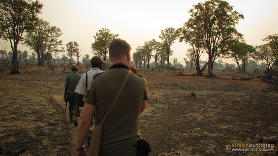 Morning Game Walk - South Luangwa