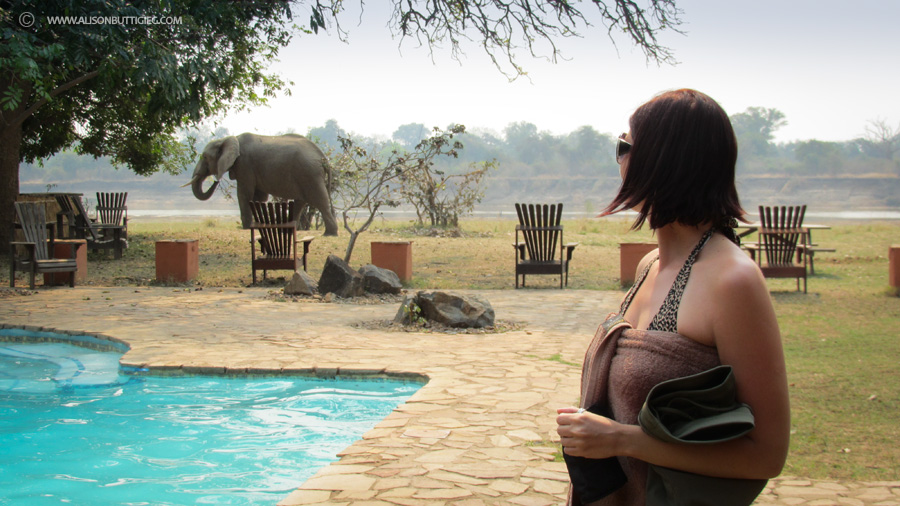 Pool with a View - Flatdogs, South Luangwa