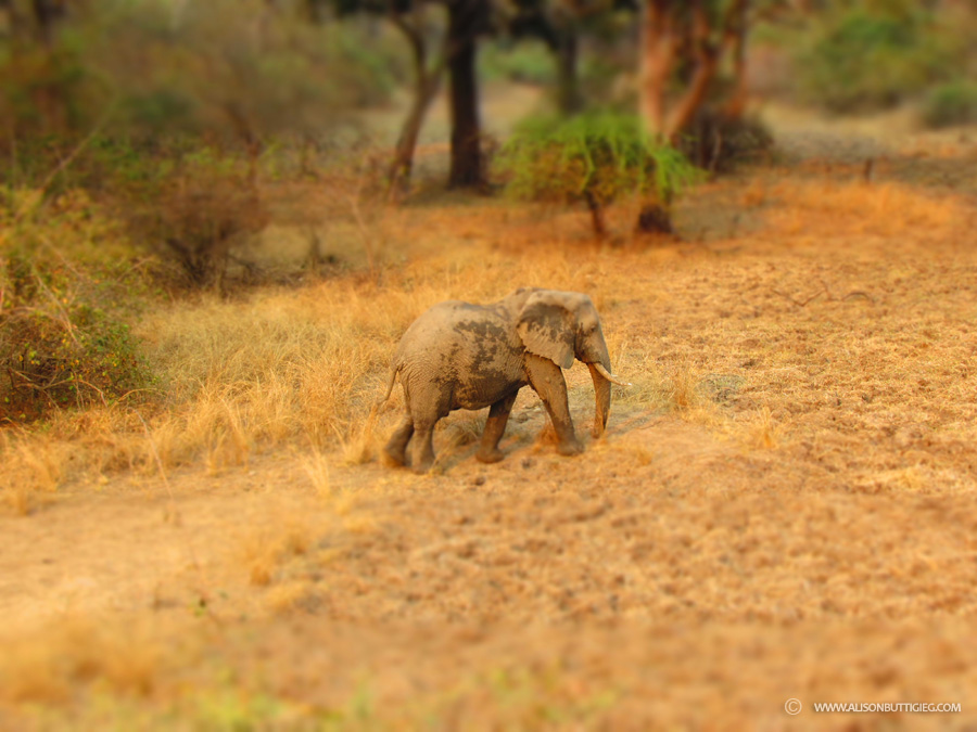 Playing around with some of the compact camera's fun settings - Miniature Elephant