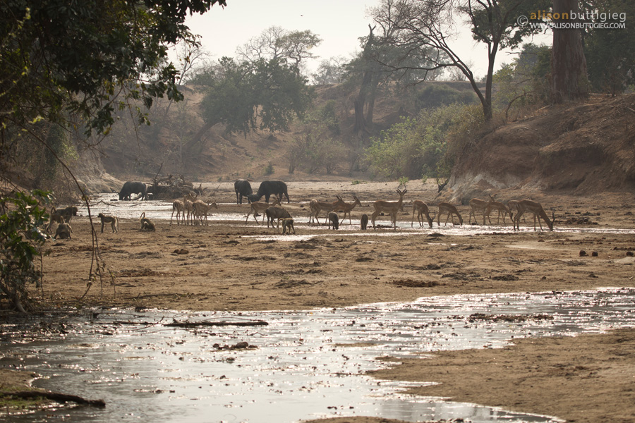 Chitake Riverbed, Mana Pools