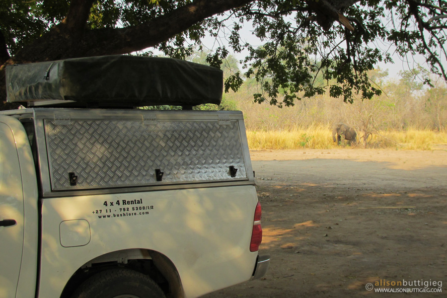 A visitor at the Nkupe Campsite, Mana Pools