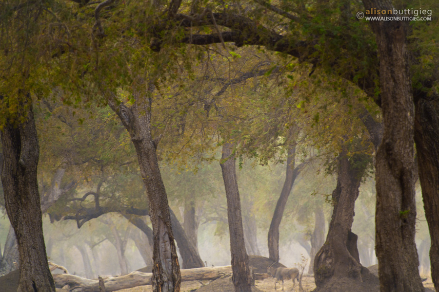 Fairy Tale Forest in Mana Pools