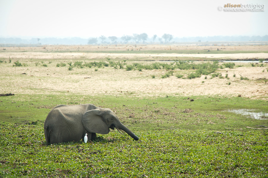 Ellie in the floodplain in front of Nkupe Campiste, Mana Pools