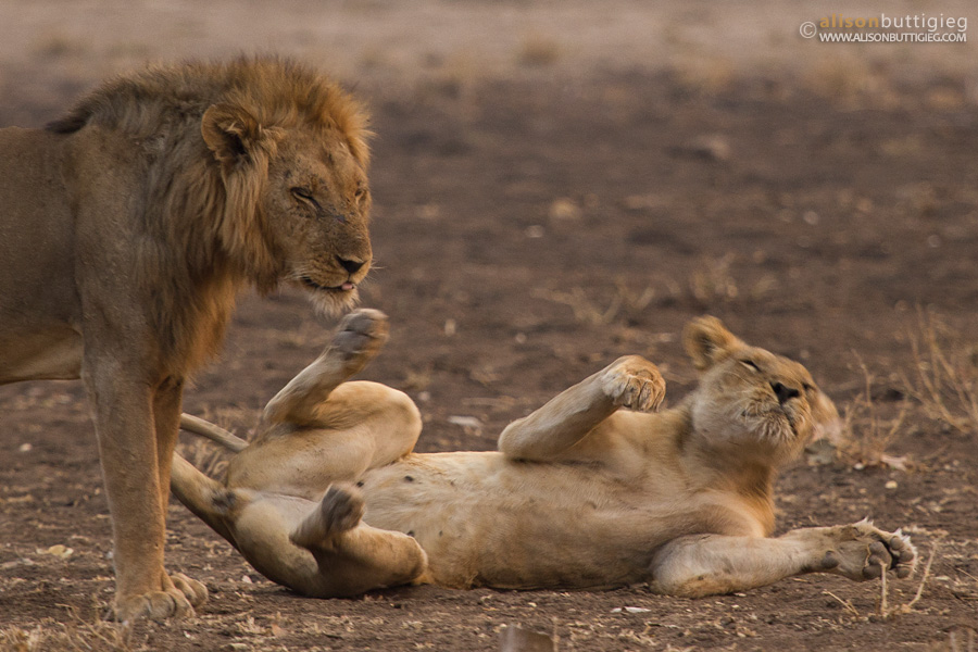 Love is in the air, Mana Pools
