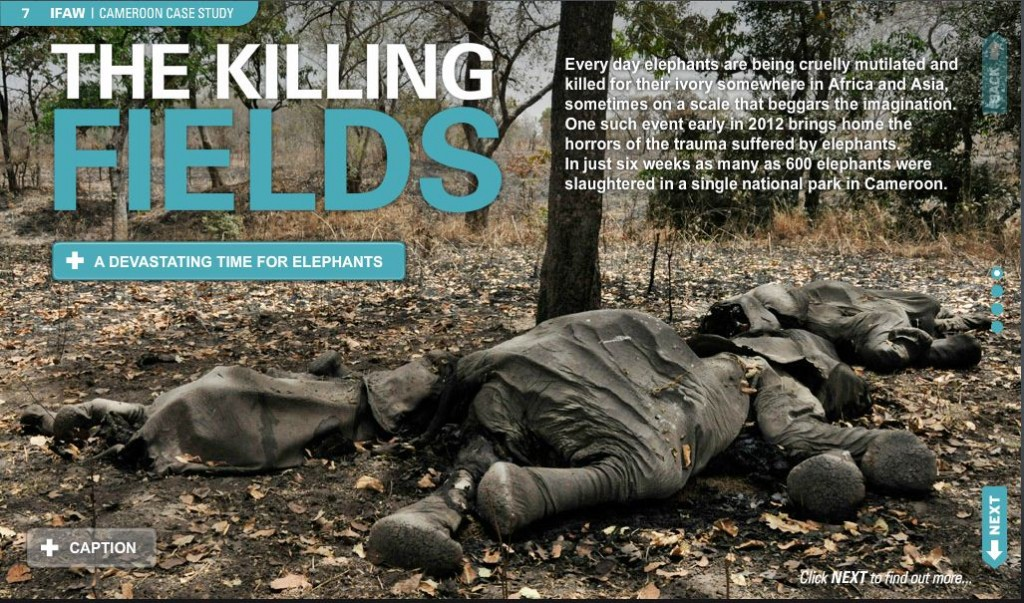 Ifaw Publishes A Digimag About The Ivory Trade Alison