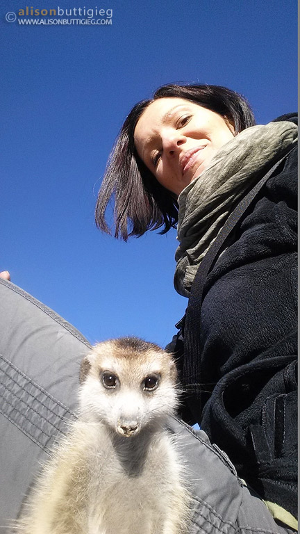The meerkats also cooperated with taking selfies!