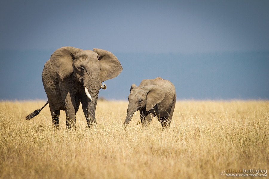 Say No to Ivory!