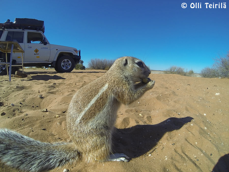 GoPro photo of the squirrel & car