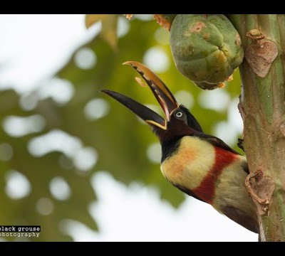 meet-the-wildlife-of-the-pantanal-pouso-alegre-lodge-hd