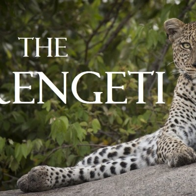 the-serengeti-a-wildlife-safari-adventure-in-tanzania-full-hd-1